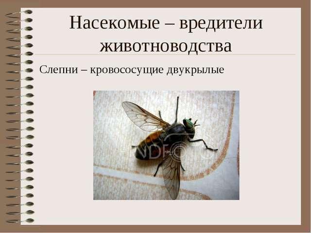 Насекомые – вредители животноводства Слепни – кровососущие двукрылые