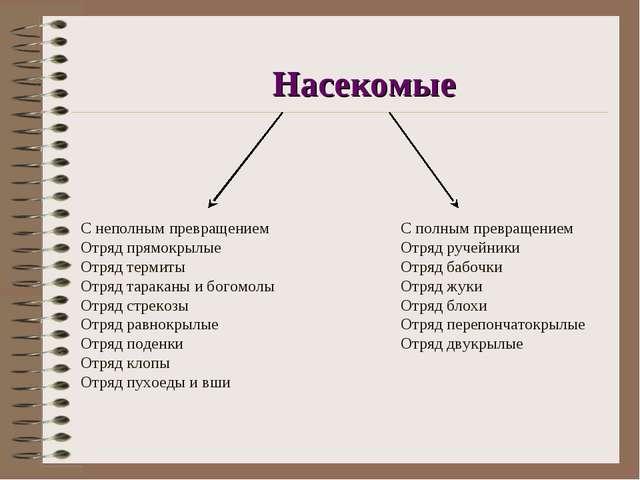 Насекомые  С неполным превращениемС полным превращением Отряд прямокры...