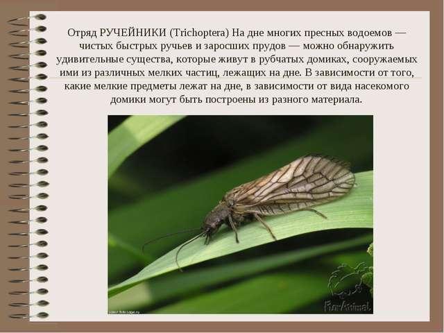 Отряд РУЧЕЙНИКИ (Trichoptera) На дне многих пресных водоемов — чистых быстрых...