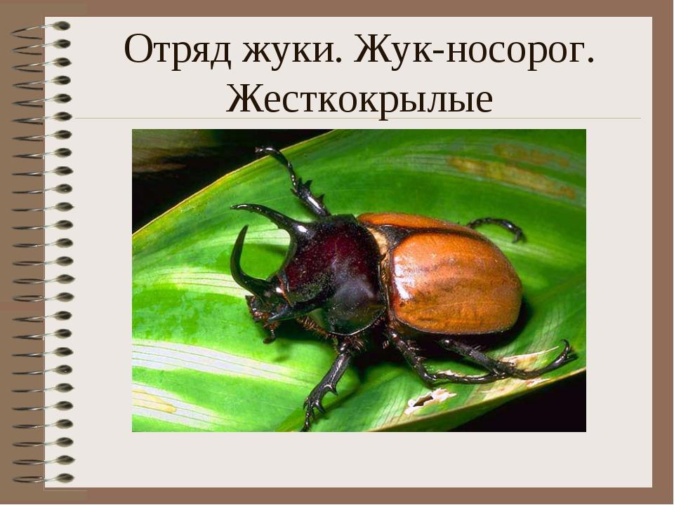 Отряд жуки. Жук-носорог. Жесткокрылые