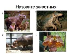 Назовите животных А Б Г В