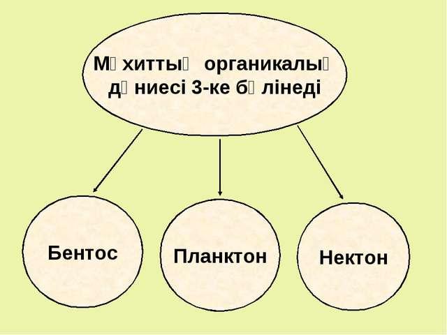Мұхиттың органикалық дүниесі 3-ке бөлінеді Бентос Планктон Нектон