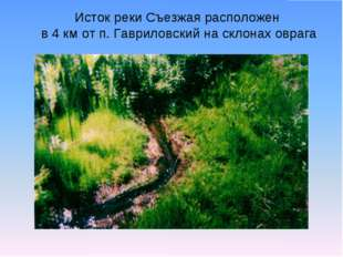 Исток реки Съезжая расположен в 4 км от п. Гавриловский на склонах оврага