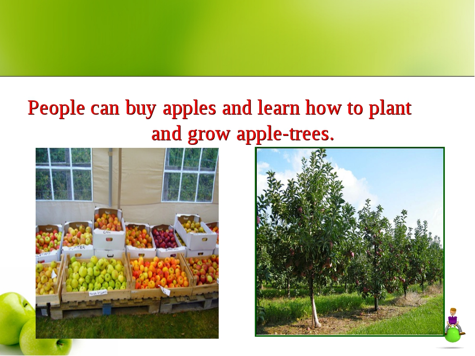 People can buy apples and learn how to plant and grow apple-trees.