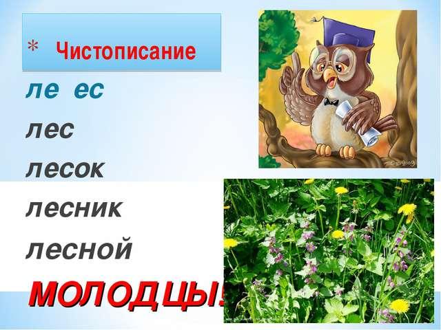 Чистописание ле ес лес лесок лесник лесной МОЛОДЦЫ!