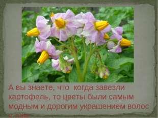 А вы знаете, что когда завезли картофель, то цветы были самым модным и дороги