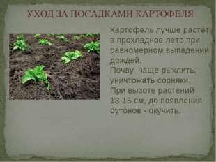 УХОД ЗА ПОСАДКАМИ КАРТОФЕЛЯ Картофель лучше растёт в прохладное лето при равн
