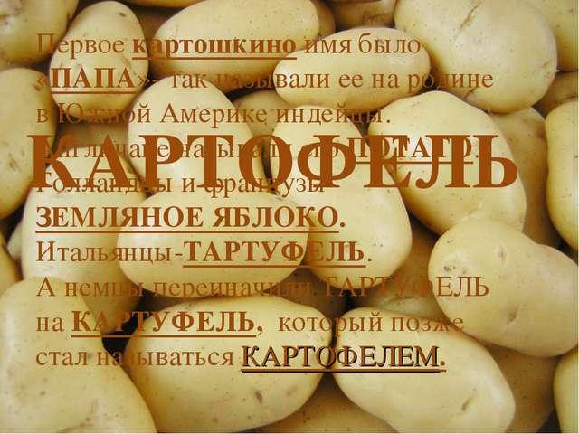 КАРТОФЕЛЬ Первое картошкино имя было «ПАПА»- так называли ее на родине в Южно...