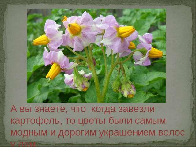 А вы знаете, что когда завезли картофель, то цветы были самым модным и дороги...