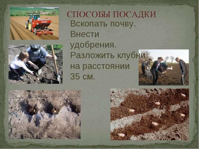 СПОСОБЫ ПОСАДКИ Вскопать почву. Внести удобрения. Разложить клубни на расстоя...