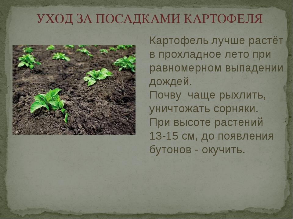 УХОД ЗА ПОСАДКАМИ КАРТОФЕЛЯ Картофель лучше растёт в прохладное лето при равн...