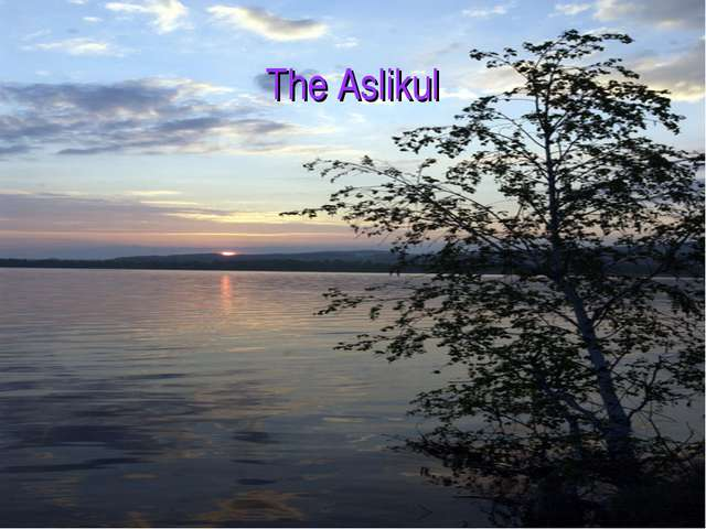 The Aslikul