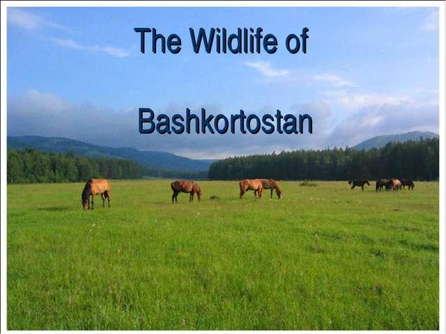 The Wildlife of Bashkortostan