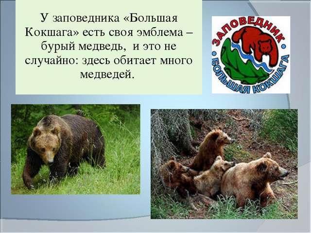 У заповедника «Большая Кокшага» есть своя эмблема – бурый медведь, и это не...