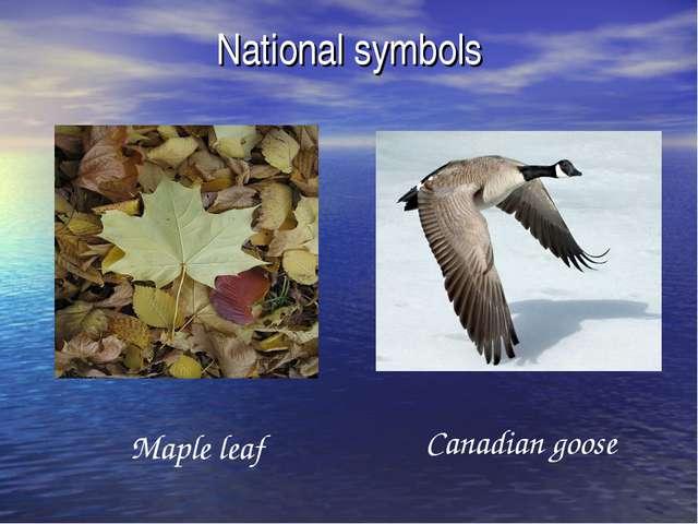National symbols Maple leaf Canadian goose