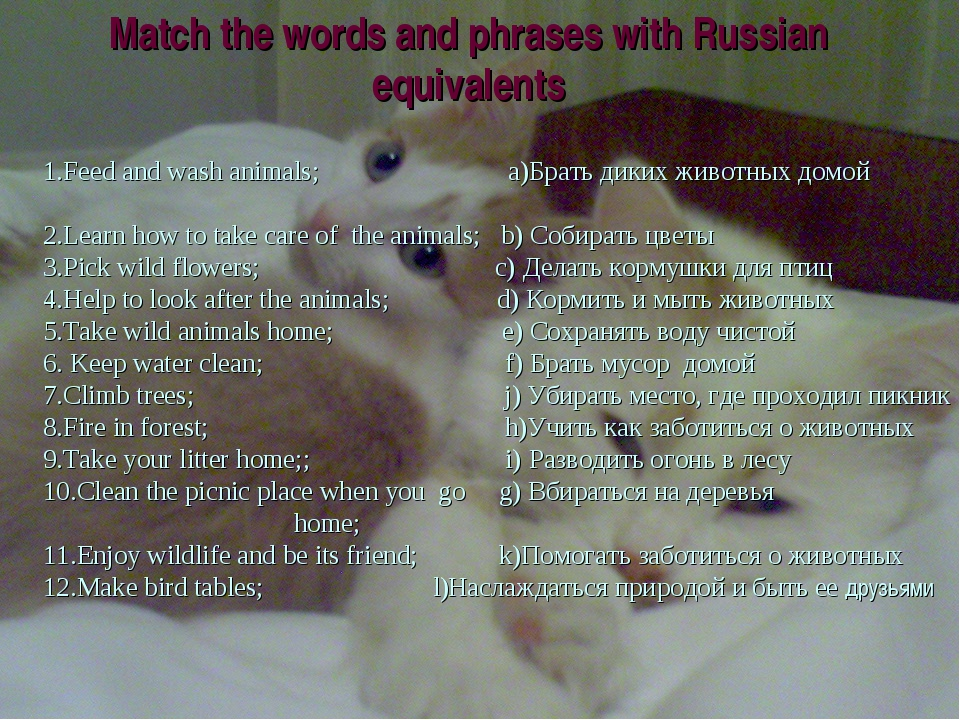 Match the words and phrases with Russian equivalents 1.Feed and wash animals;...