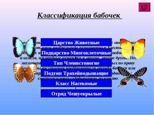Удивительный мир насекомых планеты поистине многообразен! Впечатляют наше воо