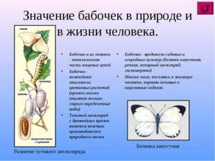 Значение бабочек в природе и в жизни человека. Бабочки и их личинки - неотъем