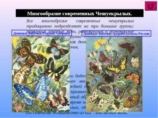 Многообразие современных Чешуекрылых. Все многообразие современных чешуекрылы