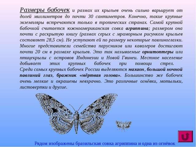 Размеры бабочек и размах их крыльев очень сильно варьирует от долей миллиметр...
