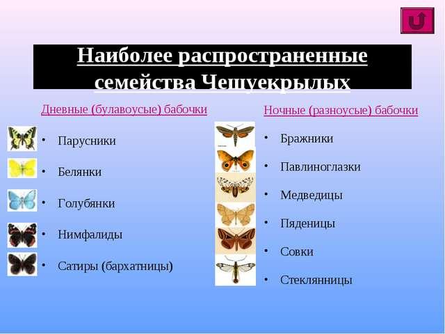 Наиболее распространенные семейства Чешуекрылых Дневные (булавоусые) бабочки...