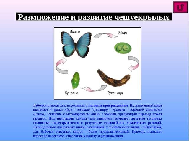 Размножение и развитие чешуекрылых Бабочки относятся к насекомым с полным пре...