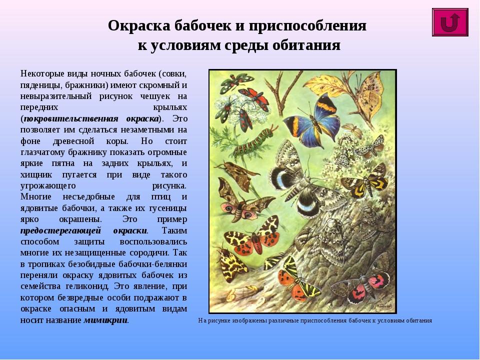 Окраска бабочек и приспособления к условиям среды обитания Некоторые виды ноч...