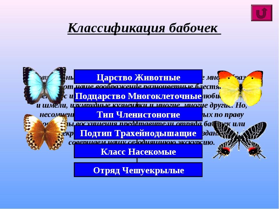 Удивительный мир насекомых планеты поистине многообразен! Впечатляют наше воо...