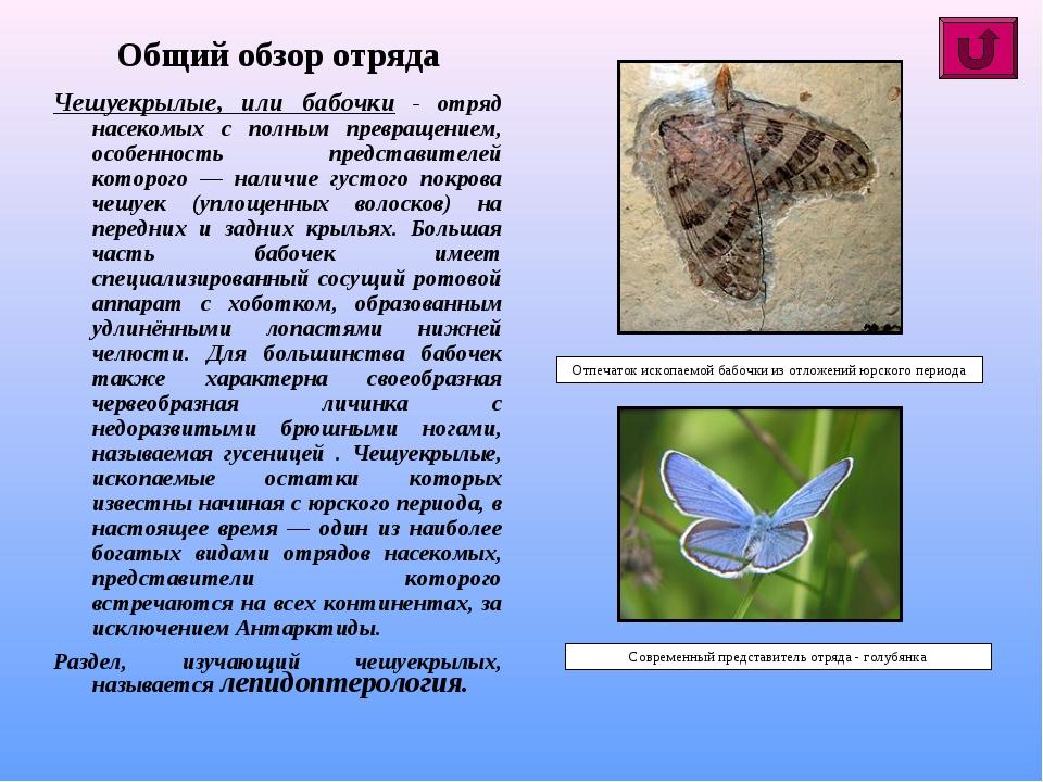 Общий обзор отряда Чешуекрылые, или бабочки - отряд насекомых с полным превра...