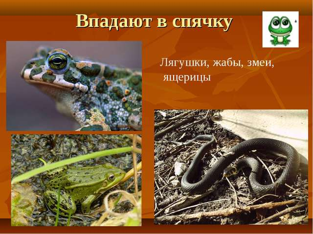 Впадают в спячку Лягушки, жабы, змеи, ящерицы