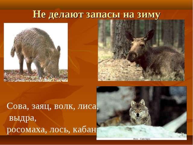 Не делают запасы на зиму Сова, заяц, волк, лиса, выдра, росомаха, лось, кабан