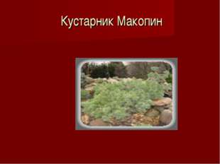 Кустарник Макопин