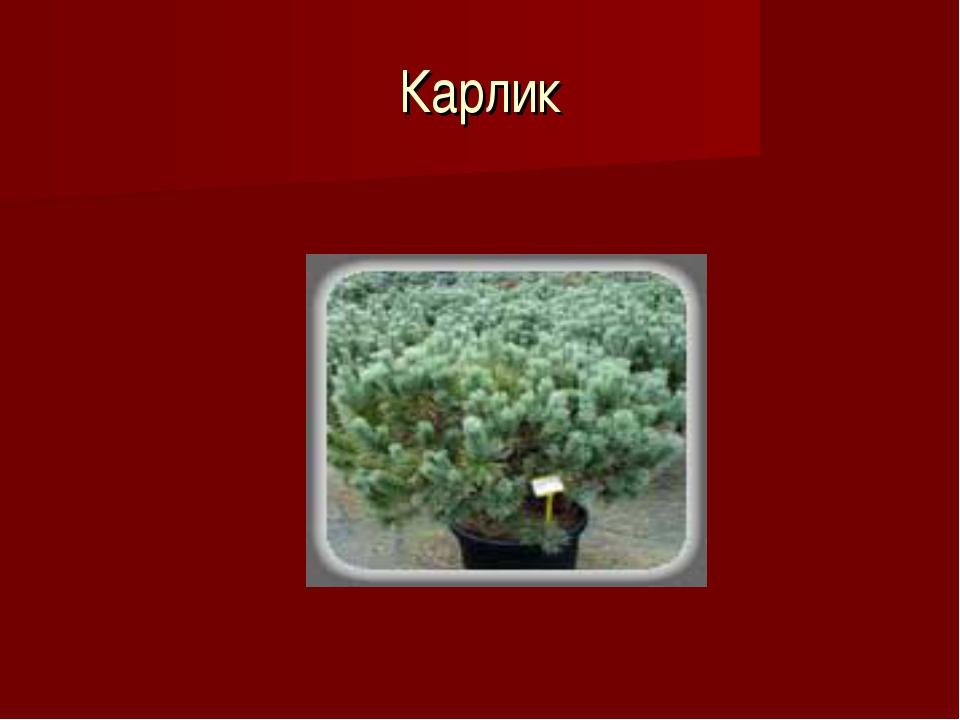 Карлик