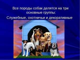 Все породы собак делятся на три основные группы: Служебные, охотничьи и деко