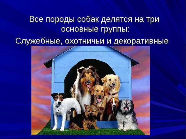 Все породы собак делятся на три основные группы: Служебные, охотничьи и деко...