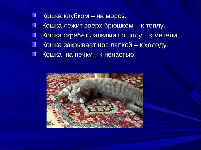 Кошка клубком – на мороз. Кошка лежит вверх брюшком – к теплу. Кошка скребет...