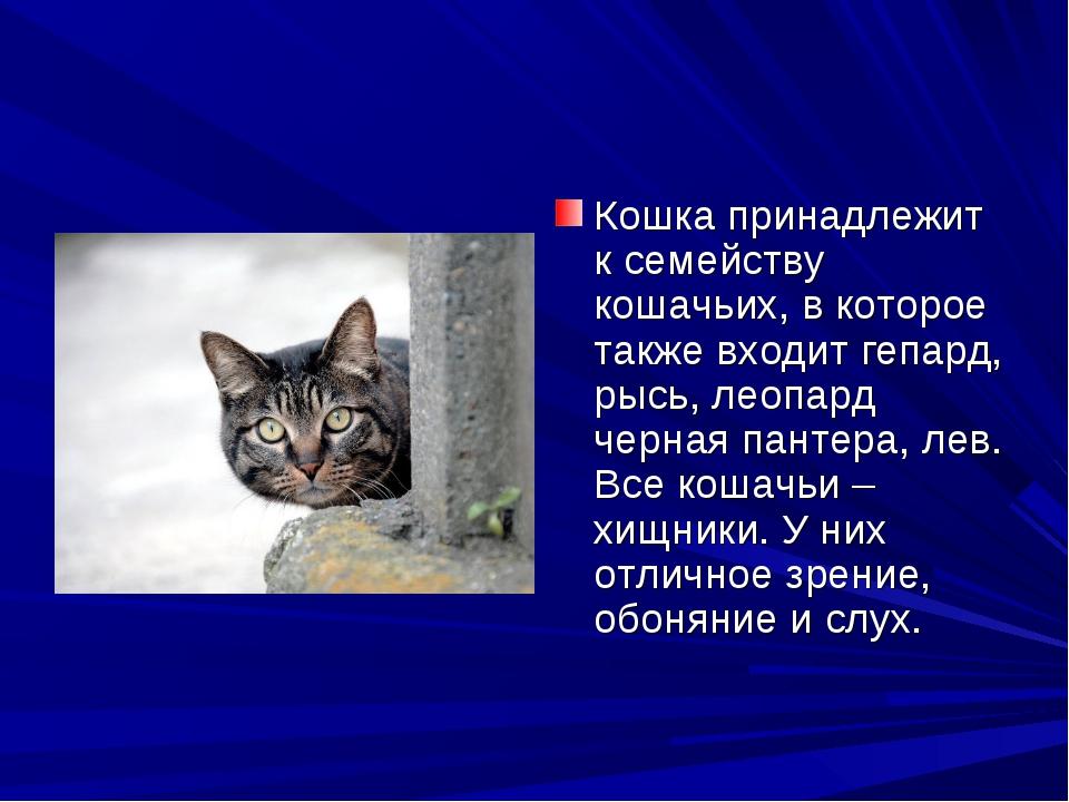 Кошка принадлежит к семейству кошачьих, в которое также входит гепард, рысь,...
