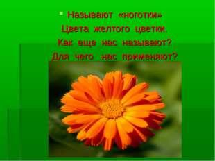 Называют «ноготки» Цвета желтого цветки. Как еще нас называют? Для чего нас п