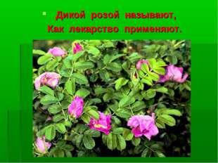 Дикой розой называют, Как лекарство применяют.