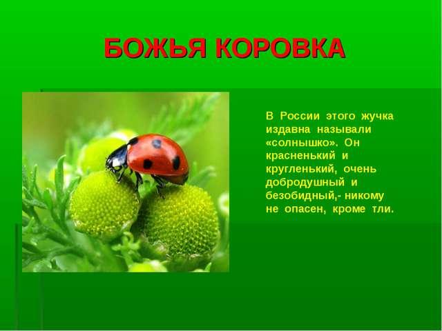 БОЖЬЯ КОРОВКА В России этого жучка издавна называли «солнышко». Он красненьки...