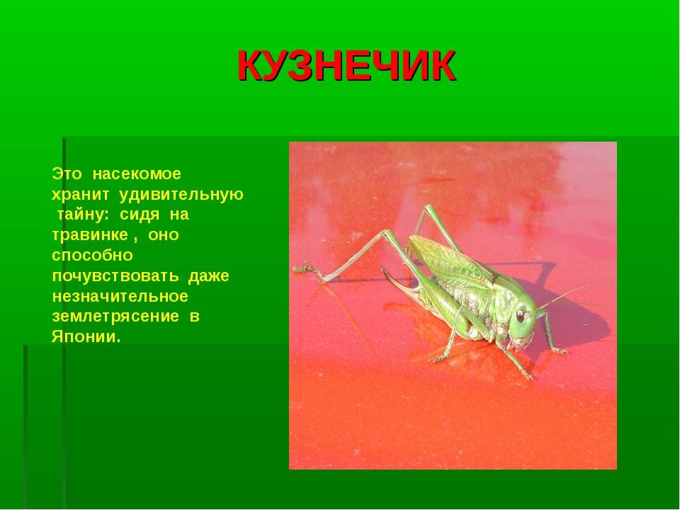 КУЗНЕЧИК Это насекомое хранит удивительную тайну: сидя на травинке , оно спос...