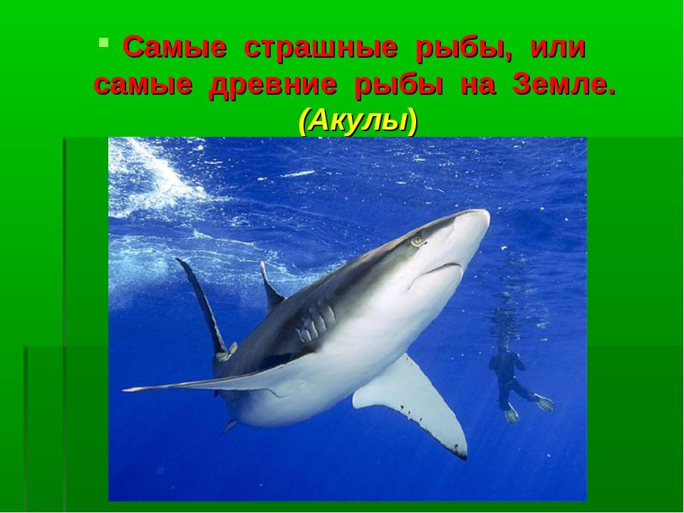 Самые страшные рыбы, или самые древние рыбы на Земле. (Акулы)