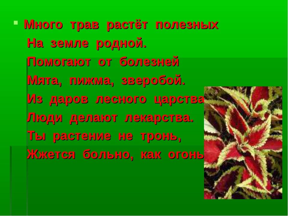 Много трав растёт полезных На земле родной. Помогают от болезней Мята, пижма,...