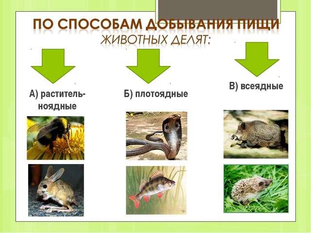 А) раститель-ноядные Б) плотоядные В) всеядные