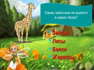 Зайцы Лисы Белки Жирафы Какие животные не водятся в наших лесах?
