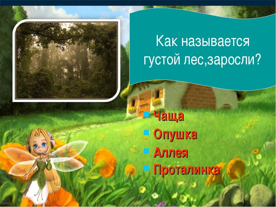 Чаща Опушка Аллея Проталинка Как называется густой лес,заросли?