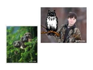 И птицы