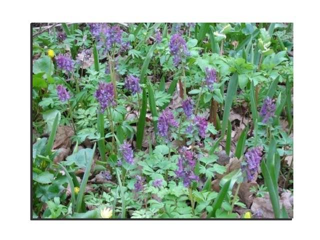 В окна врывались весны ароматы, Трель соловья нас будила когда-то, Травы, цве...