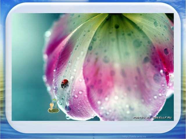 Я – Артем, люблю запах дождя