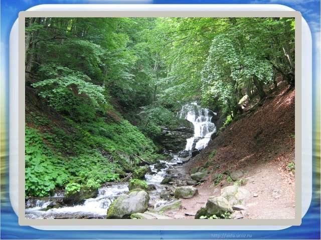 - широким лесным просторам